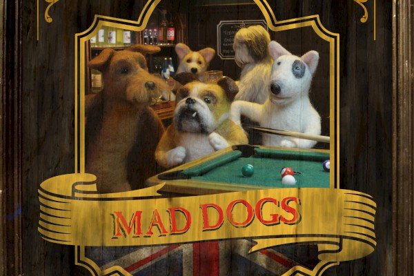 maddogs_website_pic.jpg